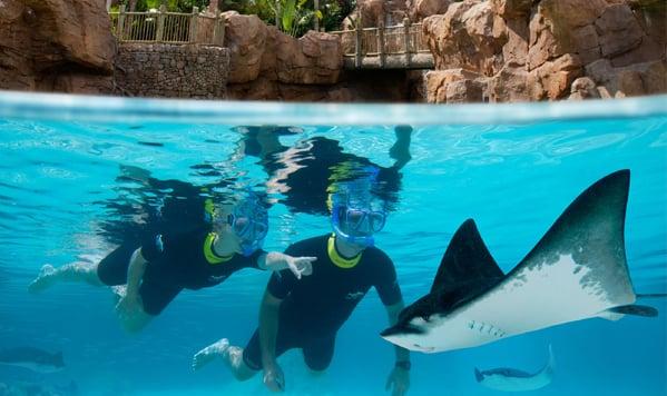 Parque Discovery Cove em Orlando: Interação com animais no Discovery Cove