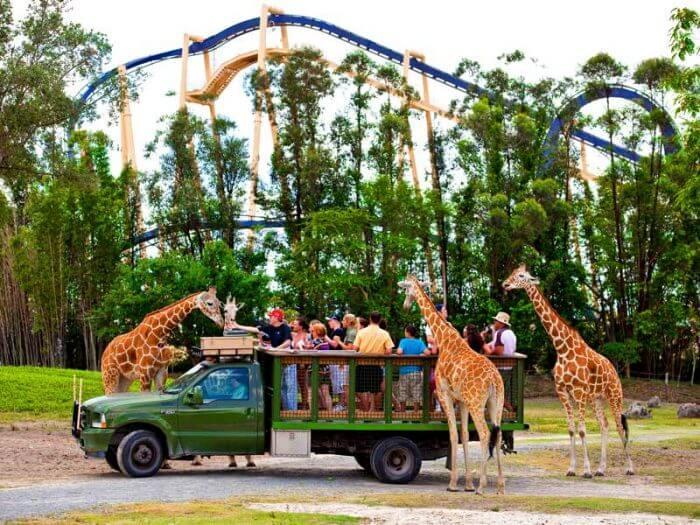 Parque Busch Gardens em Tampa: Vida selvagem no parque Busch Gardens