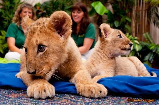 Parque Busch Gardens em Tampa: animais