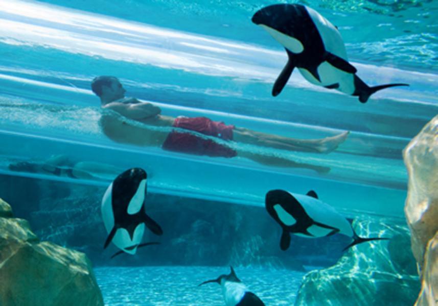 Parque Aquatica em Orlando: atrações