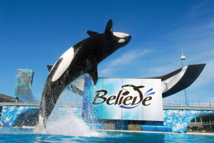 Ingressos e combos do SeaWorld Orlando