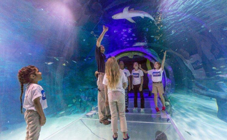 Aquário Sea Life em Orlando
