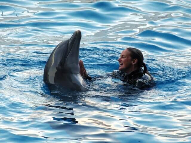 Atração Dolphins in Depth na Disney