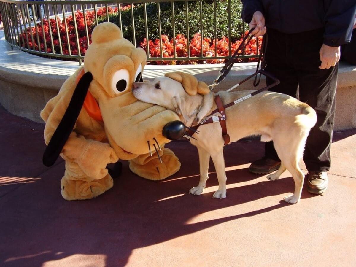 Deficientes físicos na Disney e Orlando: cão guia na Disney