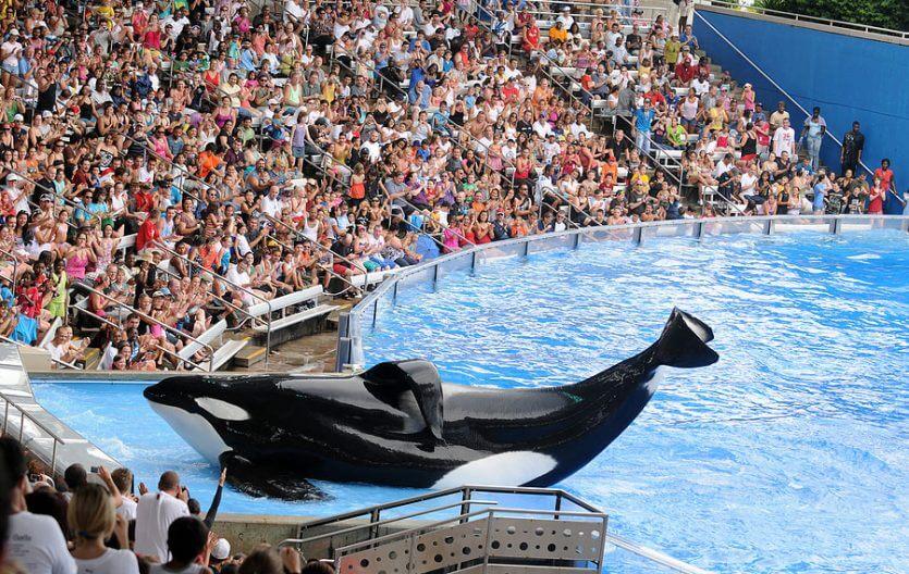 Roteiro 9 dias em Orlando: SeaWorld