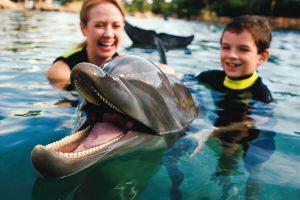 Onde nadar com golfinhos em Orlando: Discovery Cove