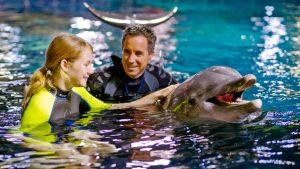 Onde nadar com golfinhos em Orlando: Epcot Seas Adventures – Dolphins in Depth