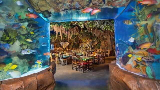 Restaurante Rainforest Cafe Orlando 4