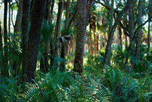 7 parques e reservas naturais em Orlando: Reserva natural Tosohatchee State