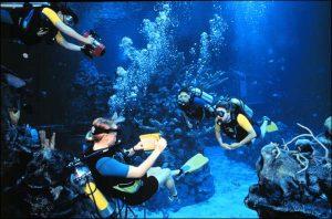 Mergulho no Epcot na Disney Orlando: mergulhadores