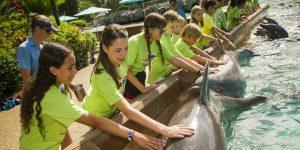 7 passeios pelos bastidores em Orlando: SeaWorld Adventure Camp