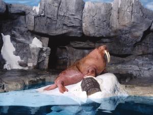 7 atrações e brinquedos do Parque SeaWorld em Orlando: Wild Arctic