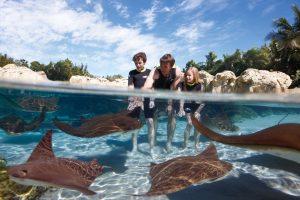 Como passar um dia no parque Discovery Cove em Orlando: arraias