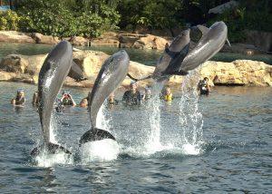 Como passar um dia no parque Discovery Cove em Orlando: golfinhos
