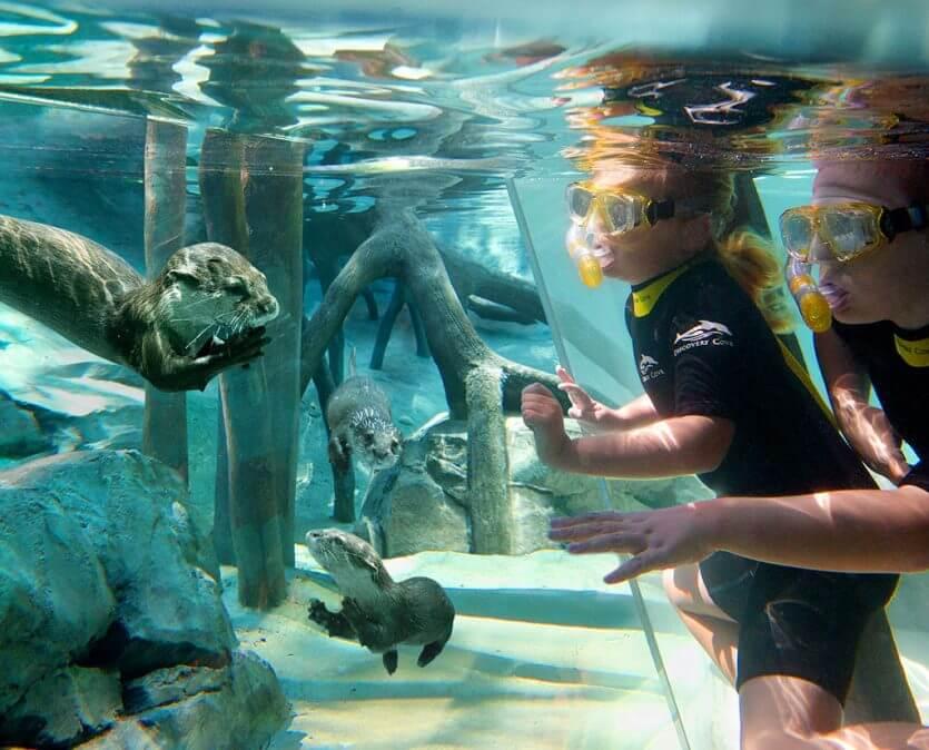Como passar um dia no parque Discovery Cove em Orlando: lontras