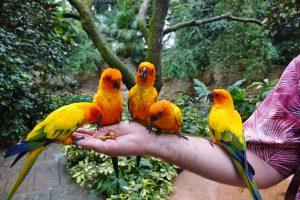 Como passar um dia no parque Discovery Cove em Orlando: Explorer's Aviary