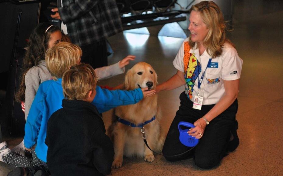 Viajando com cachorros e animais para Disney e Orlando: indicações dos aeroportos para cachorros e animais
