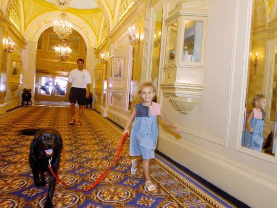Viajando com cachorros e animais para Disney e Orlando: hotéis Pet-Friendly que aceitam cachorros e animais de estimação