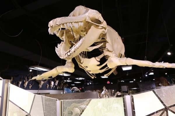 Museu Skeletons de ossos e esqueletos em Orlando: exposição de esqueleto