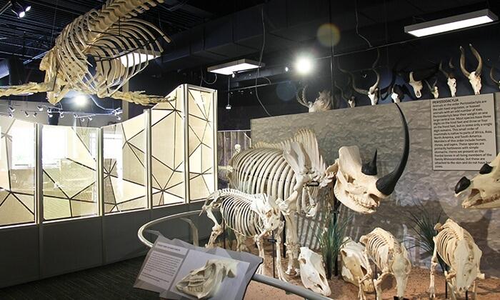 Complexo ICON Orlando 360 em Orlando: Museu Skeletons
