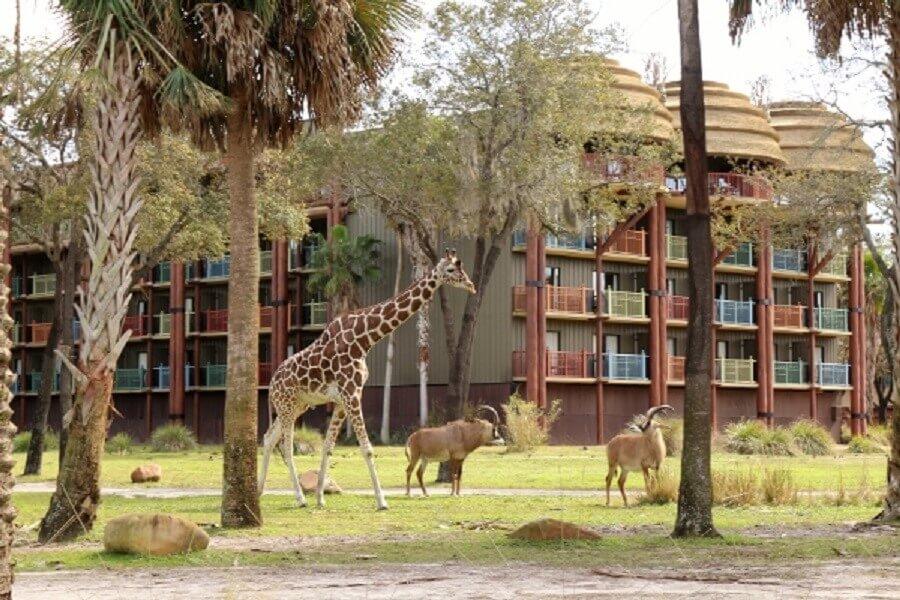 Por que não em Orlando? Dicas imperdíveis para Aproveitar o Melhor dos Hotéis Temáticos no Dia das Crianças: Disney's Animal Kingdom Lodge