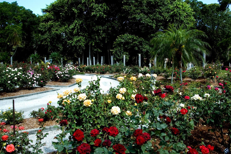 O que fazer em Sarasota: Mable's Rose Garden