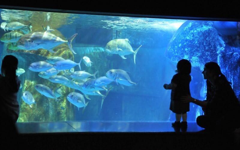 O que fazer em Sarasota: Mote Marine Laboratory & Aquarium