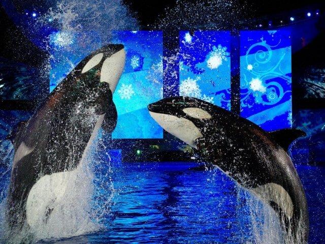 Christmas Celebration no SeaWorld Orlando
