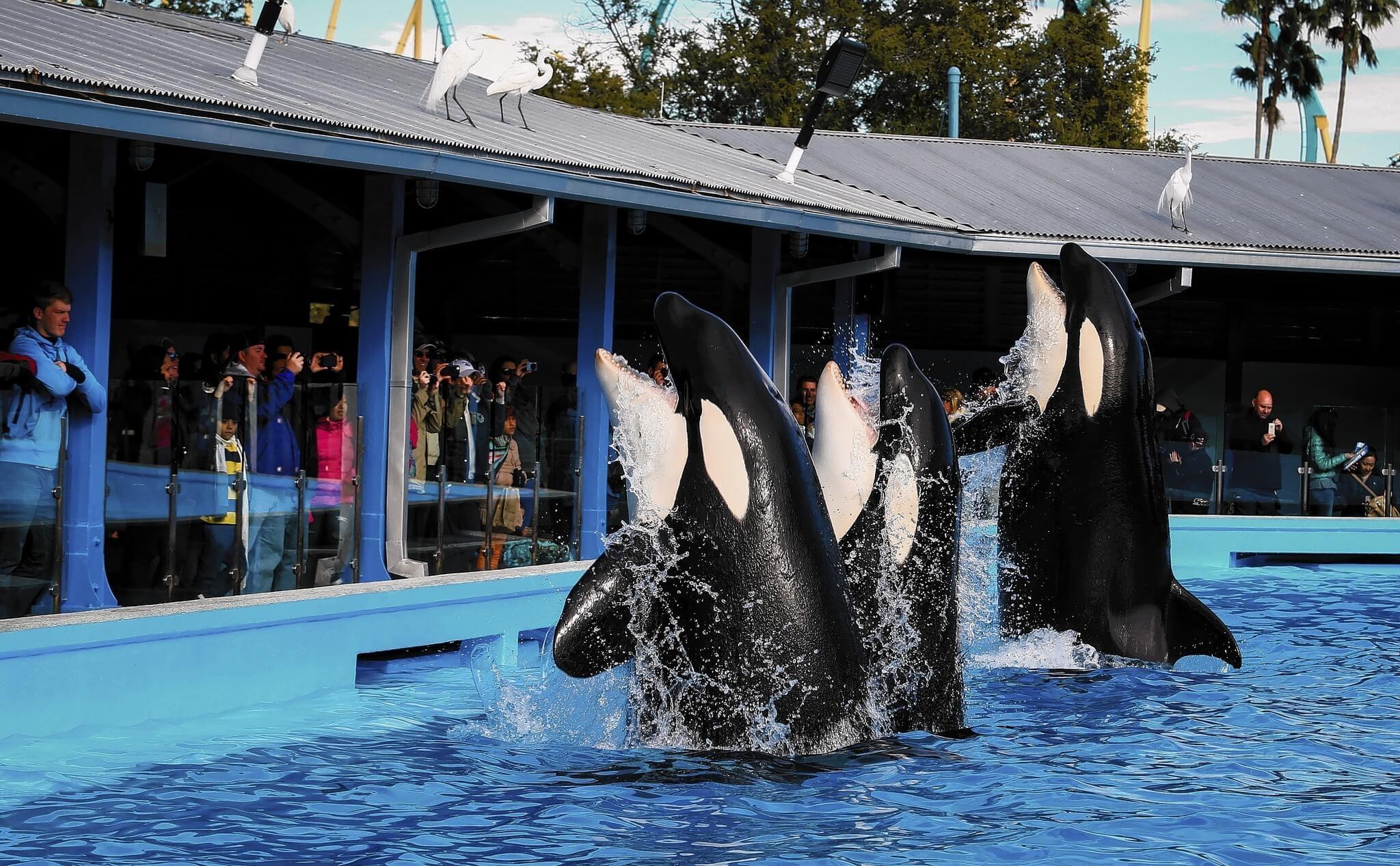 Refeição com a Shamu no SeaWorld Orlando: baleias