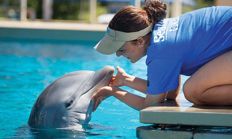 Passeio pelos bastidores do SeaWorld Orlando: Inside Look