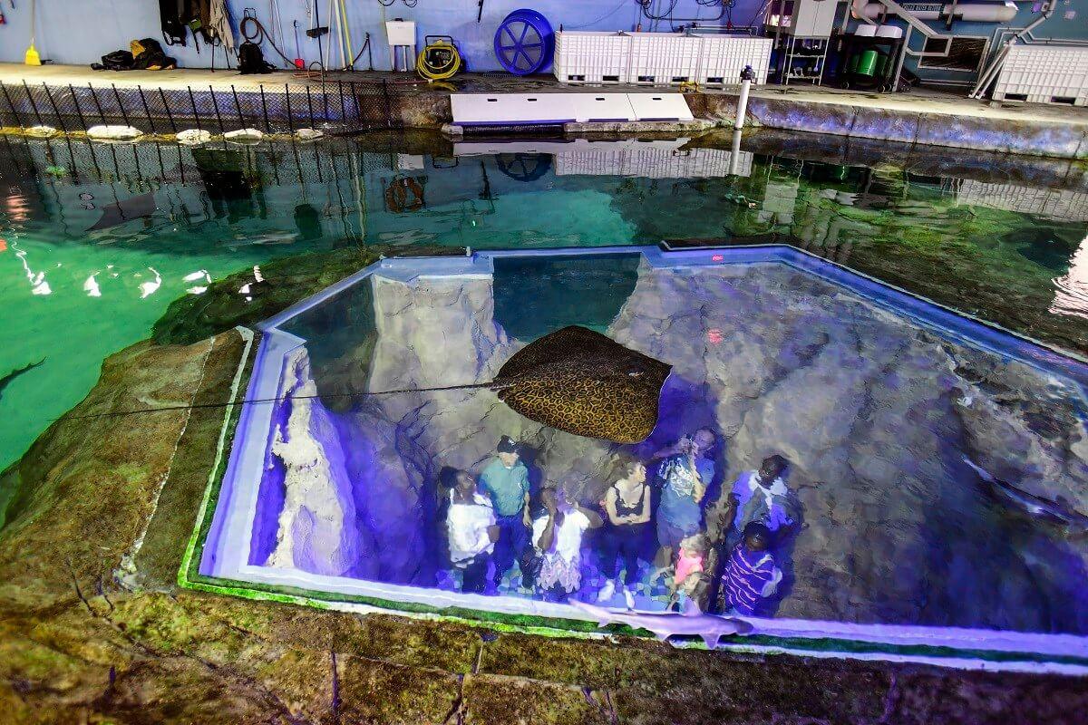 Passeio pelos bastidores do SeaWorld Orlando: Manta Aquarium