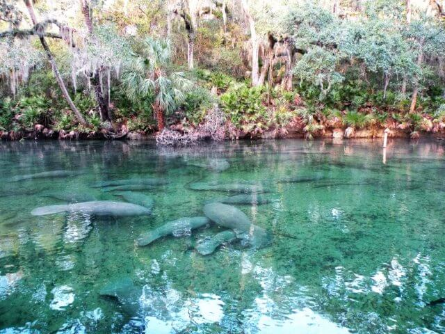 Blue Spring State Park próximo a Orlando